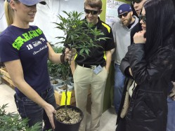 Book Your 'Bud And Breakfast', Marijuana Tourism Is Growing In Colorado And Washington, Julie Weed
