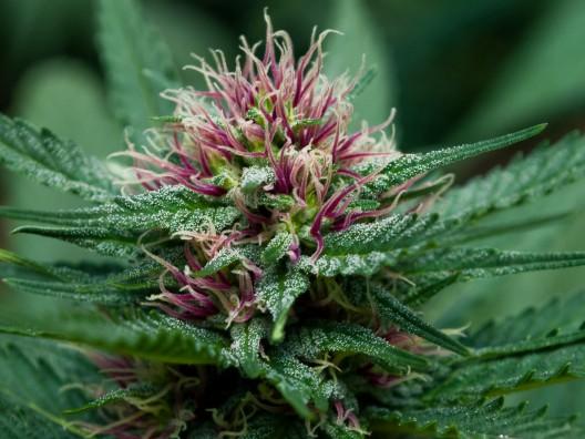 Cannabis Industry 2020 Predictions, Julie Weed