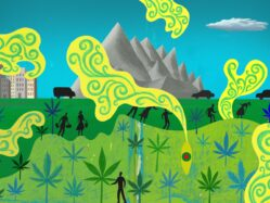 cannabis travel article ilustration